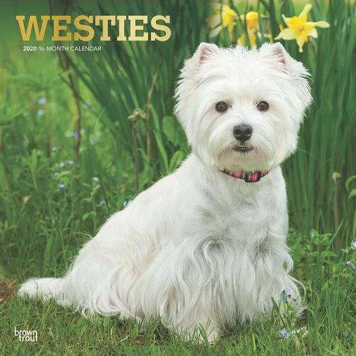 West Highland White Terriers Kalender 2020