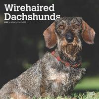 Wirehaired Dachshund Kalender 2020