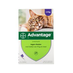 Advantage 80 kat >4 kg - 4 pipetten