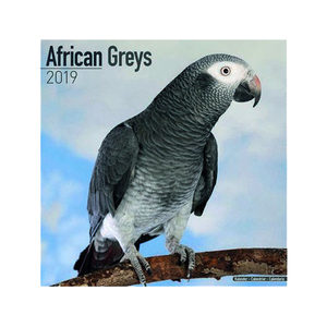 African Greys Kalender 2019