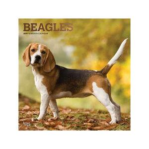 Afbeelding Beagles Kalender 2019