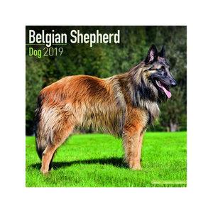 Afbeelding Belgian Shepherd Kalender 2019