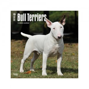 Afbeelding Bull Terrier Kalender 2019