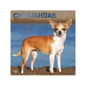 Afbeelding Chihuahua Kalender 2019