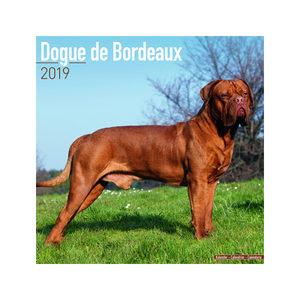 Dogue de Bordeaux Kalender 2019