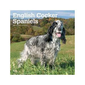 English Cocker Spaniel Kalender 2019