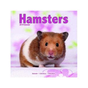 Hamster Kalender 2019