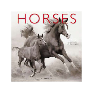 Horses Kalender 2019