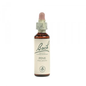 Bach Scleranthus (Hardbloem) - 20 ml