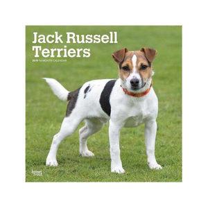 Afbeelding Jack Russell Terriers Kalender 2019