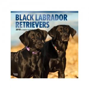 Labrador Retriever Black Kalender 2019