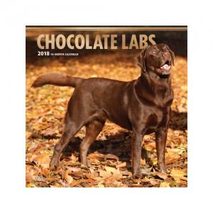 Chocolate Labrador Retriever Kalender 2019