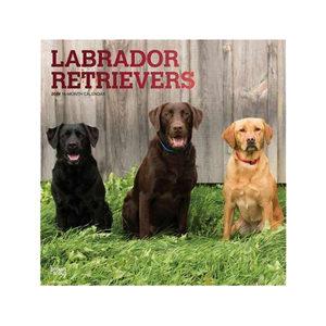 Labrador Retriever Kalender 2019