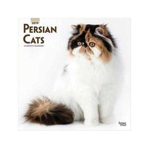 Persian Cat Kalender 2019