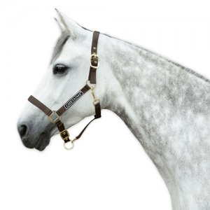 Chetaime Halster Deluxe - Bruin - Pony