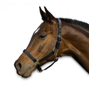 Chetaime Halster Deluxe - Zwart - Pony