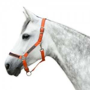Chetaime Safety-first Halster - Orange - Pony