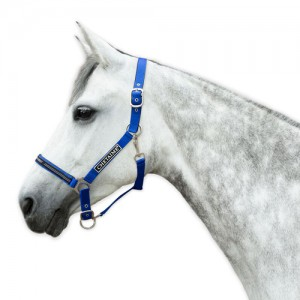 Chetaime Safety-first Halster - Royal Blue - Pony