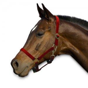 Sectolin Halster Economic - Pony - Rood