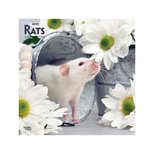 Rats Kalender 2019