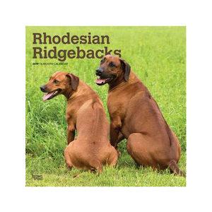 Rhodesian Ridgeback Kalender 2019