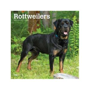 Afbeelding Rottweilers Kalender 2019