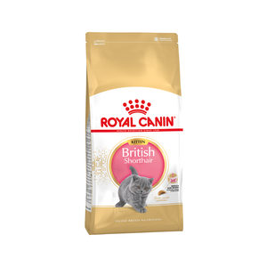 Royal Canin British Shorthair Kitten – 10 kg