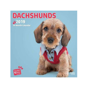 Afbeelding Studio Pets Adorable Dachshund Kalender 2019