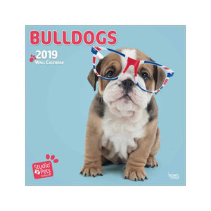 Studio Pets Bulldog Kalender 2019