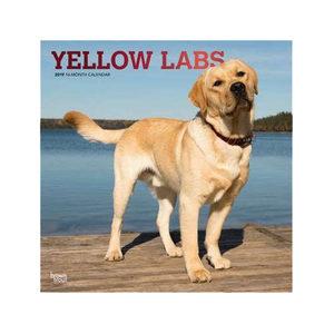 Afbeelding Yellow Lab Retrievers Kalender 2019